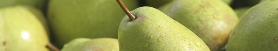 Close up picture of pears