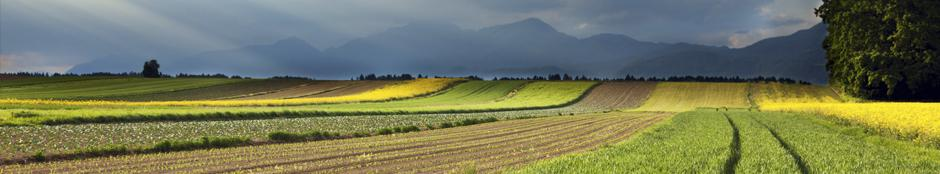 Picture of a field with mountains in the distance.